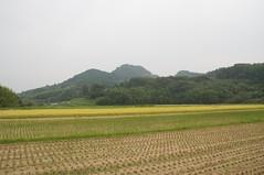 バンブートーン前の水田