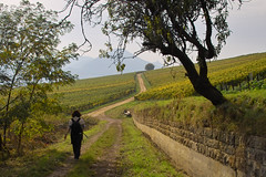 Herbstwanderung (Bibendum41) Tags: herbst weinberge herbststimmung frankweiler