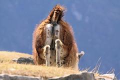 Peru_Machu_Picchu_Sun_Oct_08-62