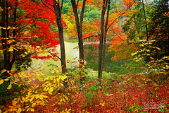 EveRy LeAf SpeaKs BLiSs (jaki good miller) Tags: autumn ohio color fall nature leaves landscape interestingness saturated woods colorful awesome explore exploreinterestingness bliss jakigood hue pikecounty top500 explorepage sciototrails explored explorepages godisamazing autumnset skiesandscapes