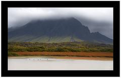 Autumn in Snfellsnes (svanur sig) Tags: autumn lake geese iceland snfellsnes snaefellsnes svanur sigurbjrnsson