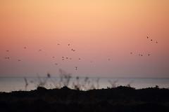 Vendicari volo all'alba (SignorG) Tags: fauna alba rosa vendicari fenicotteri ciminiera naturale riserva tonnara faunistica