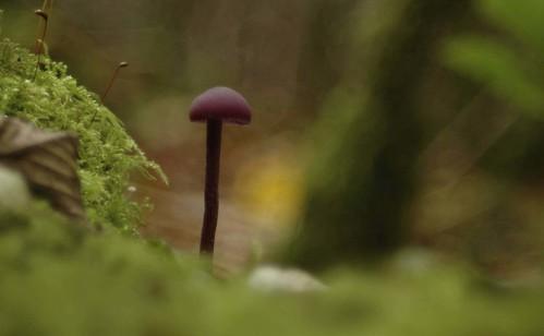 purple mushroom5