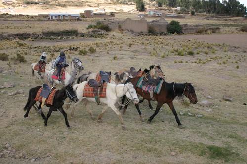 Horses near Copacabana, Bolivia.