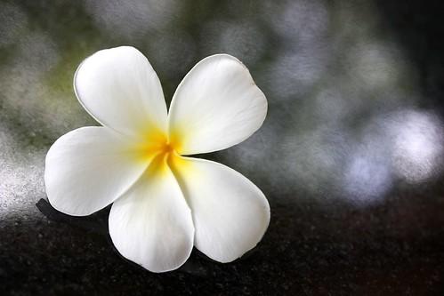 Bloom - Blüte