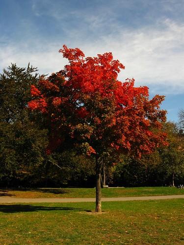 B'klyn Autumn