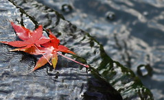 Let's leave together (J ~Amaral~) Tags: color fall leaves waterfall pond feaf