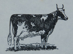 The Good Acres Farm -- Cow