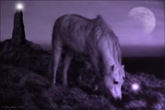 Enchanted Dream         unicorn of crwbin (Lensational) Tags: horse moon mountain rock stone wales night canon stars 350d magic cymru dream luna pony mystical layers paintshoppro unicorn magical equestrian enchantment equine standingstone postprocessing welshmountainpony carmathenshire crwbin lensational