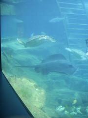 PIC_0057 (scubawatters) Tags: hawaii oahu blowhole sealifepark
