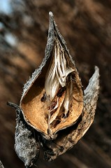 Seedlings (local paparazzi (isthmusportrait.com)) Tags: nikon seed micro 28 60mm d2h mostviewed localpaparazzi redskyrocketman