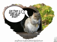 FBI: captioner2925241}  Can I have a burger to go with these fries?? (Frozen in Time photos by Marianne AWAY OFF/ON) Tags: nature squirrel squirrels wildlife critters furryfriday veteranspark soe animalplanet flickrtoys fbi misterrogersneighborhood youlookinatme friends~ framedphotos creativephoto hamiltonveteranspark nationalgeographicwannabes shieldofexcellence createdbyusingflickrtoys imagescreatedwiththeuseoffdsflickrtoys nationalgeographicareyougoodenough easterngreysquirrels photoswithcaptions freenature favoritesbyinterestingness creativephotographers heartawards yourpreferredpictures ilovemypics onewordwow nature♥unlimited♥publicgroupforever animalsinzoosparks photowatermarkframes ★beautifulshot★ naturegreenstar awwwed~cuteadorablephotos captioner2925241 nationalgeographiswannabes