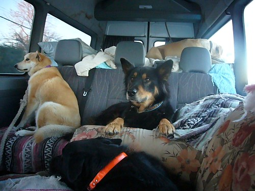Four Dogs.  One Van.