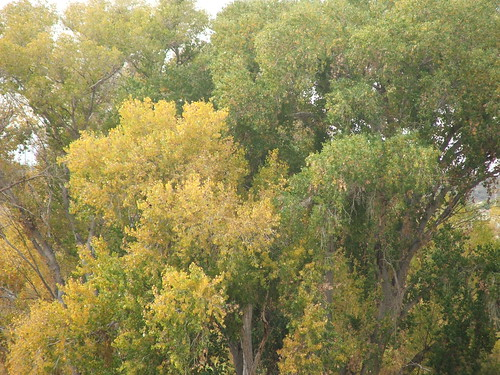 Fall Colors in Wickenburg, AZ