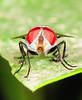 RED EYE (PhotoGrapherQ80 «KWS») Tags: macro closeup micro adel abdeen