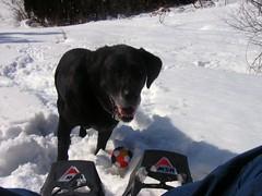雪遊び楽しいでやんす(嬉しさでへらへら顔のAmie)