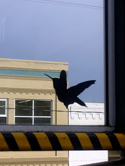 Another free Windowzoo bird (liquidnight) Tags: seattle streetart bird hummingbird stickers decal ovo communityart ephemeralart windowzoo