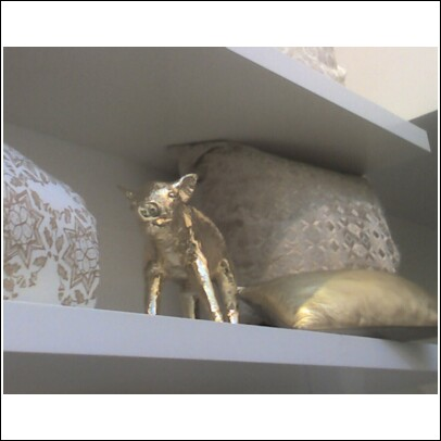 calypso golden pig