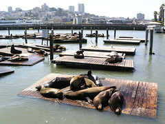 San Francisco - Pier 39 - Sea Lions