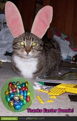 It's the Easter Bonnie! by Tabbymom Jen, on Flickr