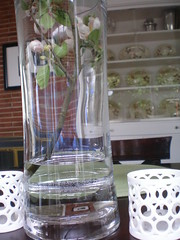 Vase (Gail Chris Spinks) Tags: house home florafauna 39w22nd