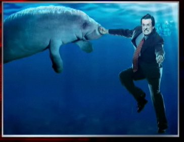 manatee punched by Colbert