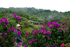 Cloud Forest Lodge (Davy Van den Eynden) Tags: costa costarica rica monteverde cloudforest annelies nevelwouden