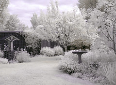 Welcome to My Garden (njchow82) Tags: light canada calgary nature landscape ir surreal alberta infrared dreamlike mygarden lumen invisiblerays inspiredbylove impressedbeauty njchow82 mindigtopponalwaysontop mmmilikeit