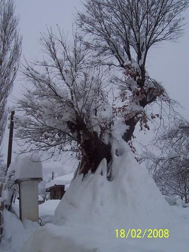 ağacdan kar