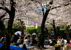 Pic-nic japons sota els cirerers / Japanese picnic under the sakura (SBA73) Tags: flowers japan japanese picnic flor saturday celebration cherryblossom sakura nippon matsumoto sabado nihon hanami japoneses jap kampai japn cirerers dissabte cerezos  japonesos