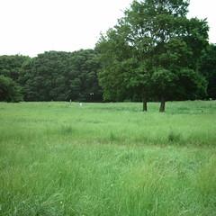 【写真】ミニデジで撮影した武蔵野公園の原っぱ