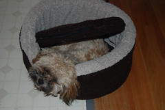 Bailey-under cushion
