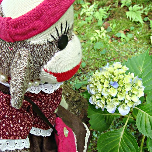Miki finds a smaller flowering hydrangea blossom. It is similar to the one Kei found! (by martian cat)