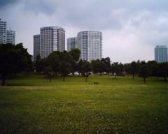 【写真】VQ1005で撮影した港パークの芝生