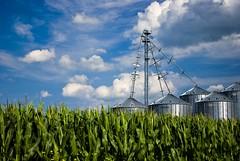 Monocots and Monoliths (Ian David Blm) Tags: green rural landscape geotagged corn farm ottawa farming harvest growth silos lush agriculture idb geo:lat=45299947 geo:lon=7552754