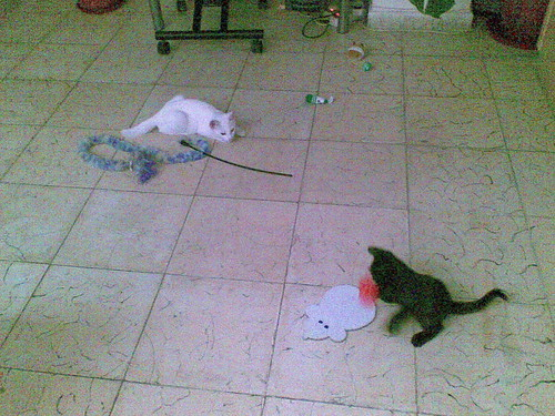 raton divertidos