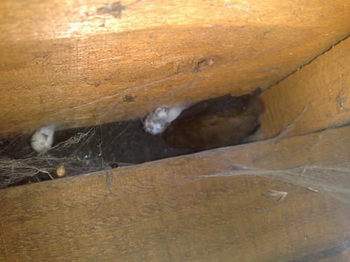 Bat in Bandon