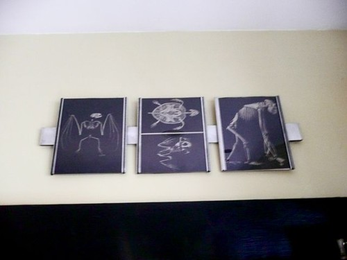 Framed animal skeletons