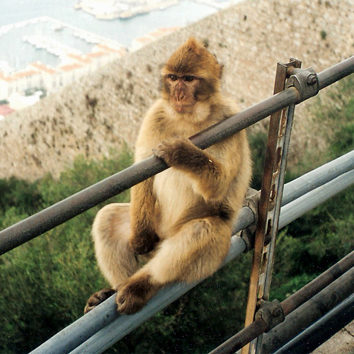 Macaco #2