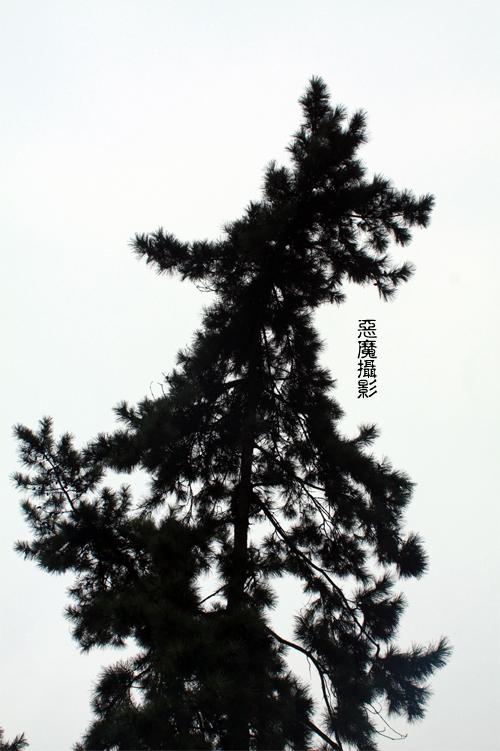china_green_06