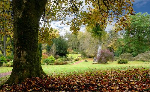 Blair garden