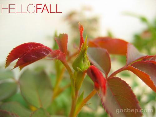 Hello Fall Garden