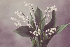 Lily of the valley (hagerstenguy) Tags: flowers flower del do lily valle vale valley lrio lirio maiglckchen  konvalinka