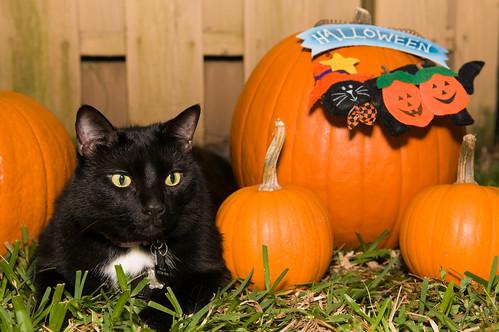 0810Pumpkins & Pets003-284
