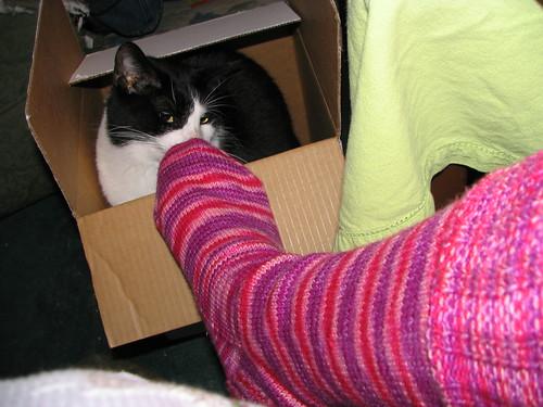 Jer Likes Socks in a Box