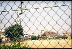 fence (eedology) Tags: holga135