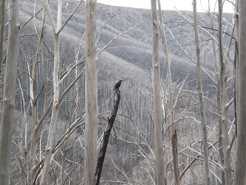raven high country mt hotham