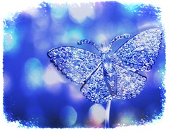 Winter butterfly (@Doug88888) Tags: pictures uk november england history texture stone museum diamonds butterfly gallery natural image bokeh picture saturday images precious buy mineral vault expensive hue purchase valuable pricey abigfave