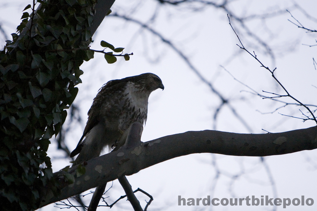 SDR Hawk 2-24-2008
