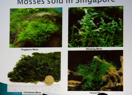 Mosses Sold in Singapore